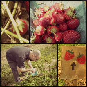 Summer Solstice Strawberry Picking